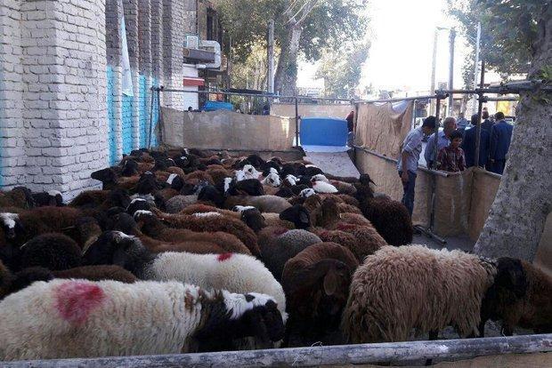 ذبح 1450 رأس دام در استان سمنان، مشارکت 1.5 میلیارد تومانی خیران