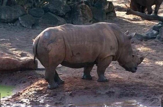سقوط کودک 2 ساله به محوطه کرگدن ها در باغ وحش فلوریدا