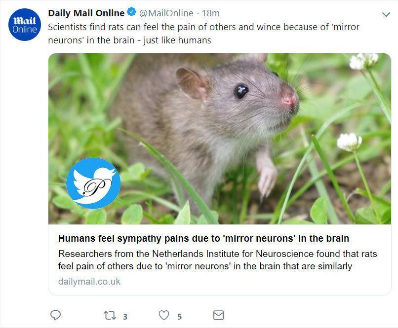 موش ها مانند انسان درد در دیگران را حس می نمایند