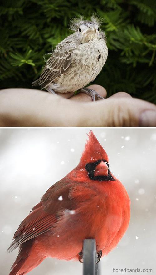 با جوجه های زشت پرندگان آشنا شوید!