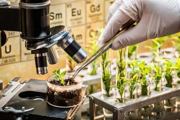 لزوم مانع زدایی از توسعه مهندسی ژنتیک برای ایجاد فرصت های اشتغال